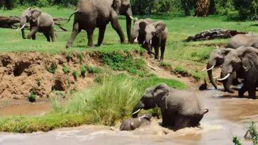 Baby elephant saved