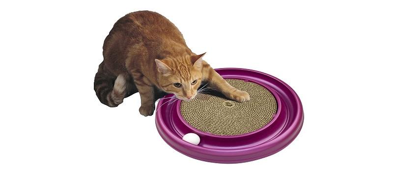 cat neutering voucher nottingham