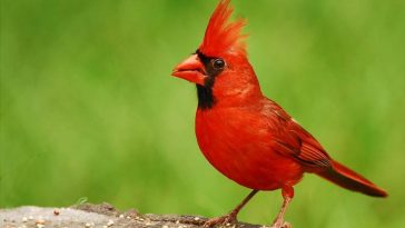 The best cardinal bird feeders