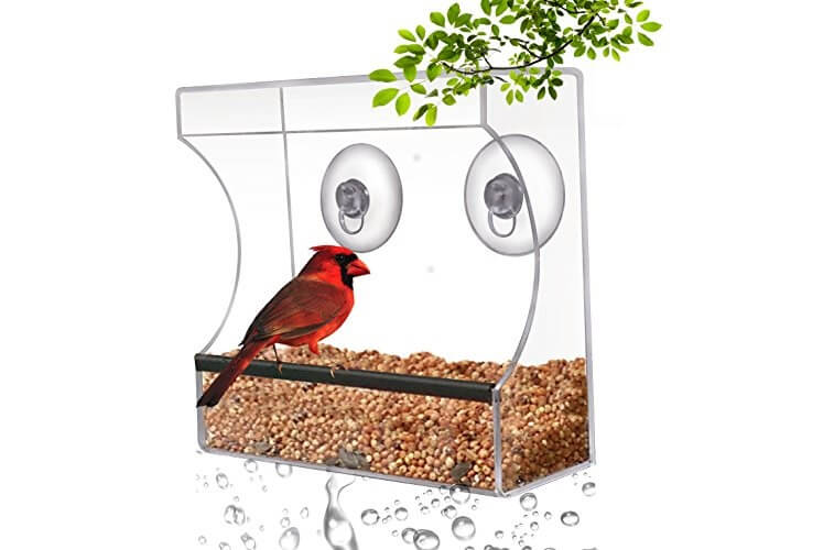 Crystal Clear Bird Feeder
