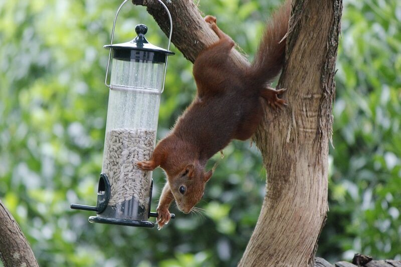 Top 4 best squirrel proof bird feeders for sale in 2017 - How do you keep squirrels out of your garden ...