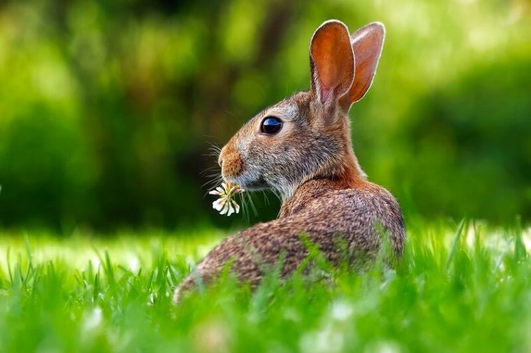 What can bunnies eat?