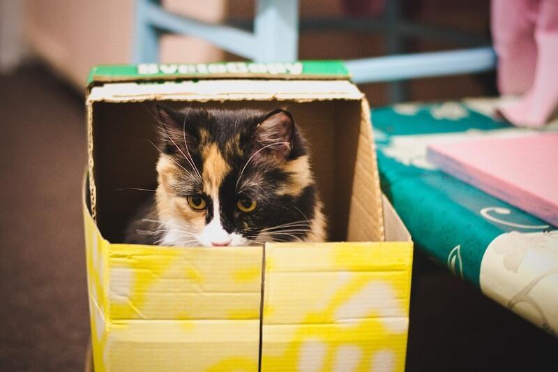 Household cat toys