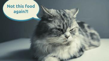 Worst wet cat food