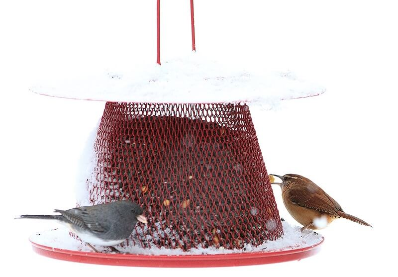 No/No Red Cardinal Bird Feeder