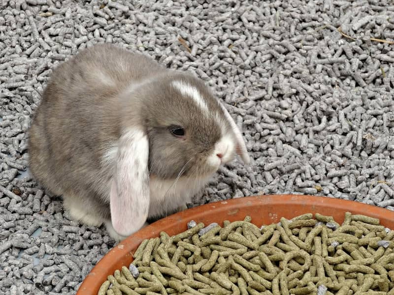 Best Bedding for Rabbits: Our Top 6 List for Great Odor