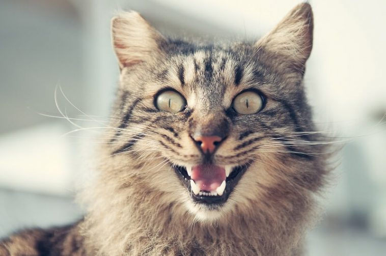 Is my cat happy? How to tell if your cat is happy