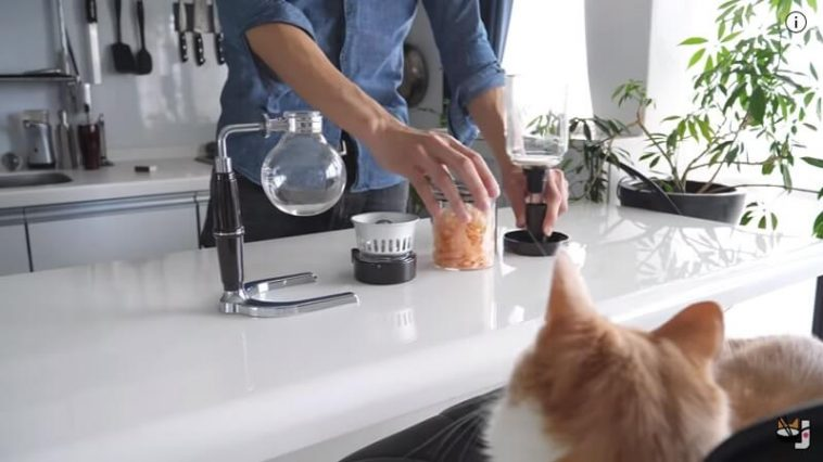 Making sushi for cats