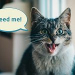 Best automatic cat feeders for wet and dry food
