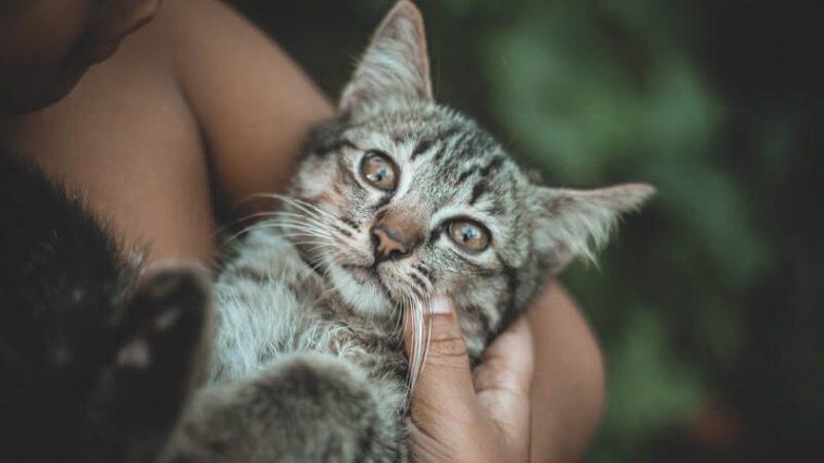 Pet care job - cat cuddler