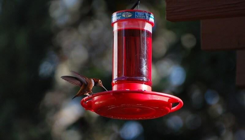 Top 8 Best Hummingbird Feeders To Easily Attract Hummingbirds