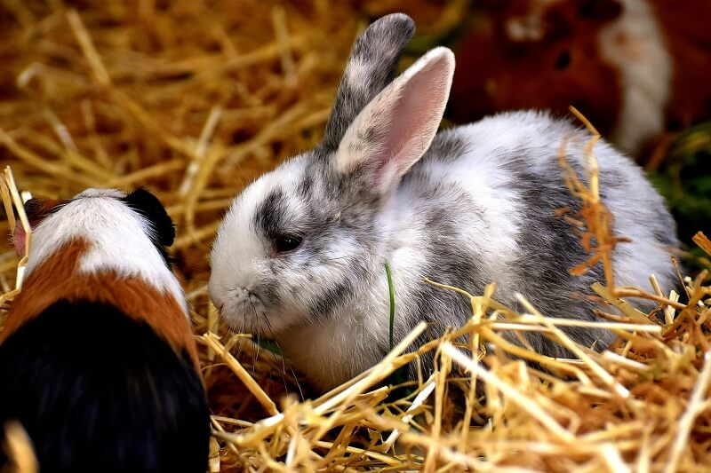 Best Bedding For Rabbits 10 Household Store Bought Items Animallama