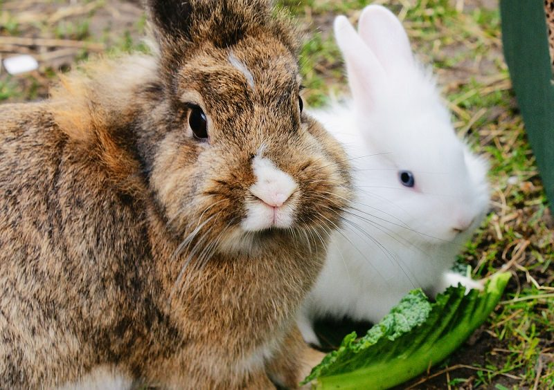 Best rabbit treats