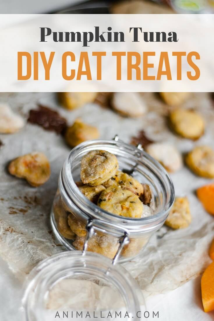 Cat treats recipe