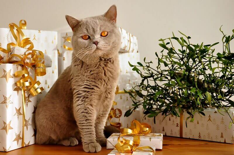 10 Best Christmas gifts for cats