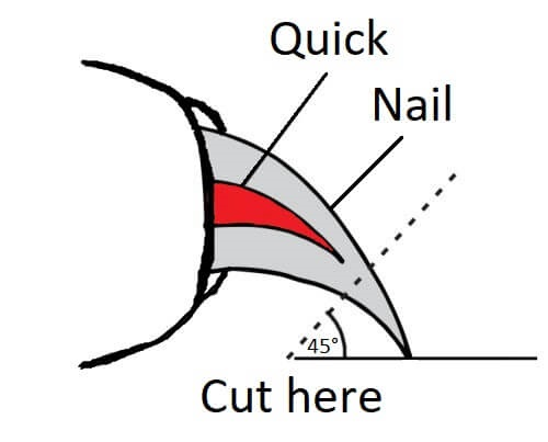 Avoid nail quick when grinding dog nails