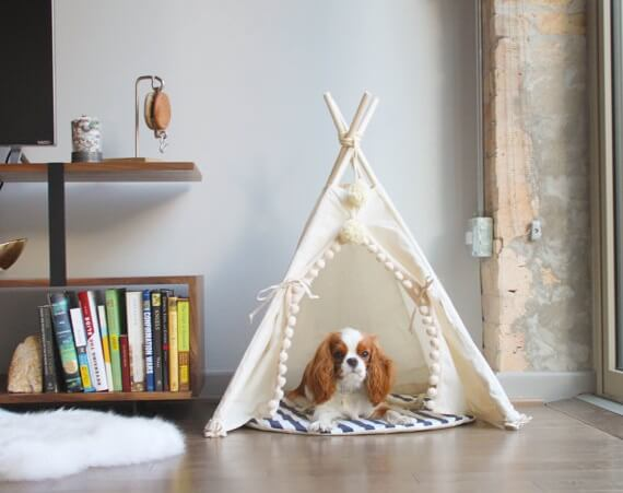 Dog teepee as gift