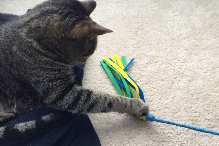 10 easy diy cat toys make cat toys out of household for Diy cat wand