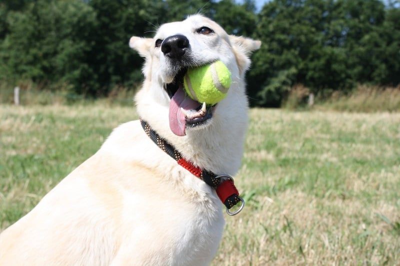 Entertaining your dog: Play fetch