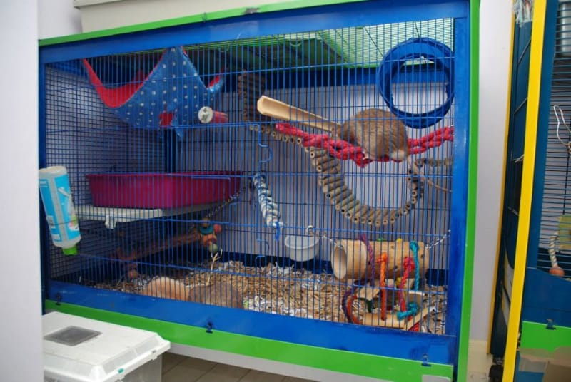 What to look for in a rat cage