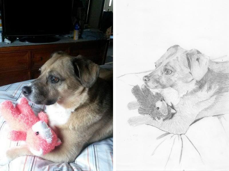 Pet portrait: A dog