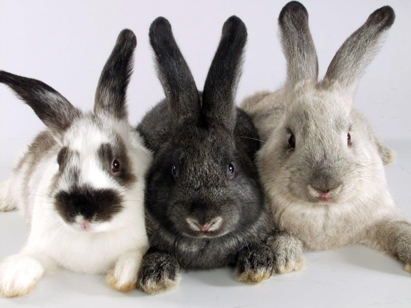 How to make rabbits happy