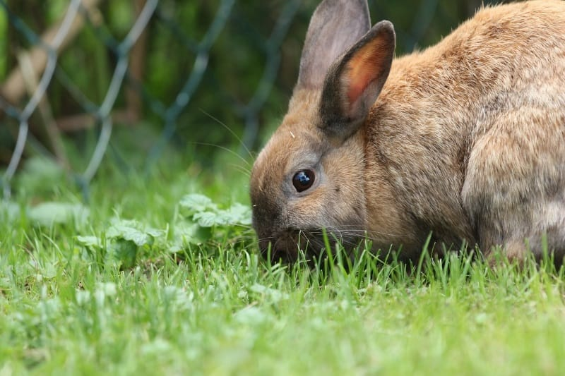 Supervised outdoor time for happy rabbits