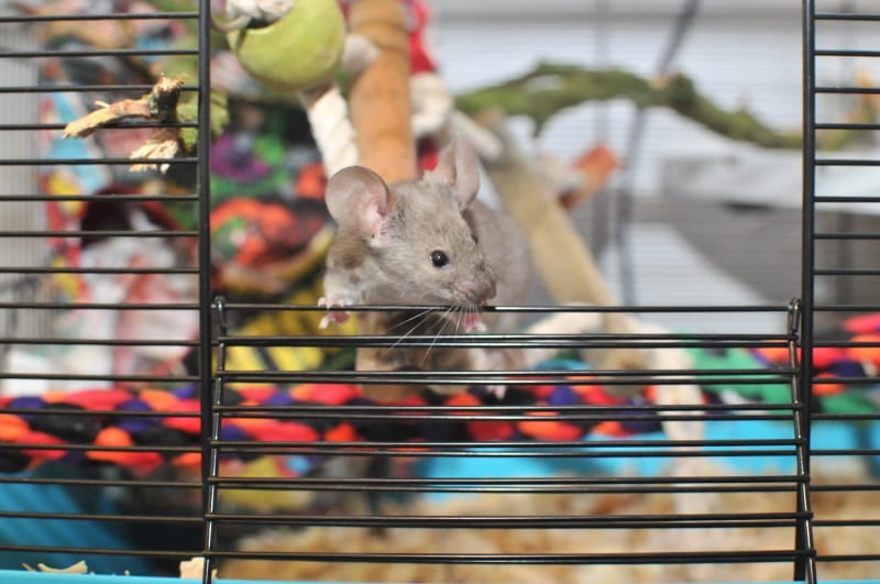 Best Cages for Mice