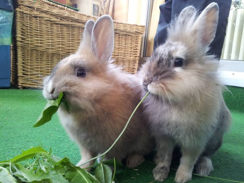 can rabbits live alone