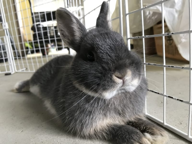 What do rabbits need in their cage