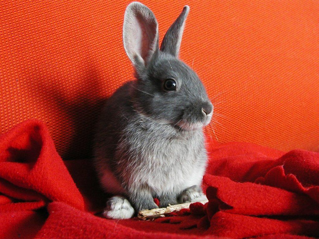 Wood sticks for rabbits