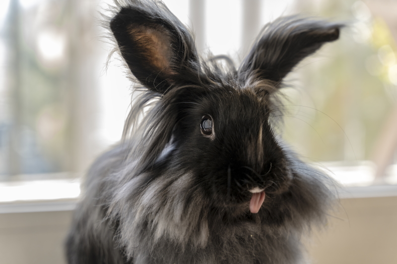 How to cheer up your bunny?