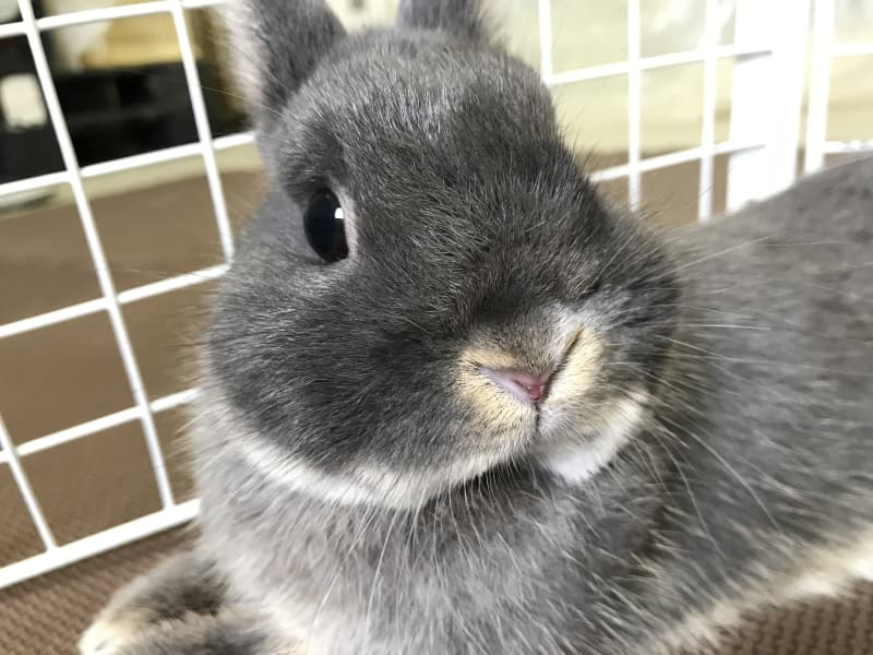 How to tell if your rabbit is sad?