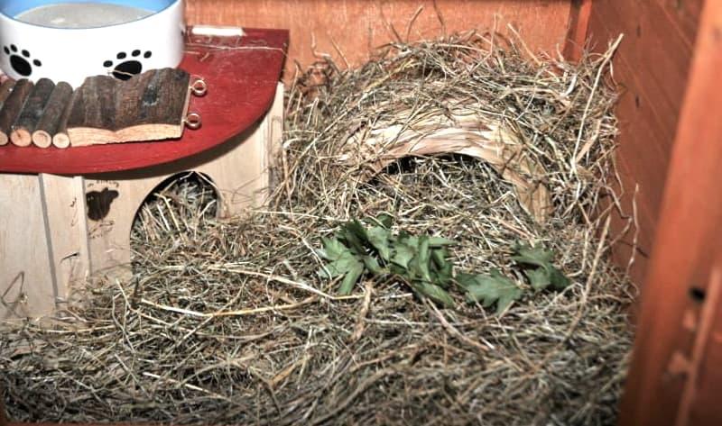 Hamster's nesting