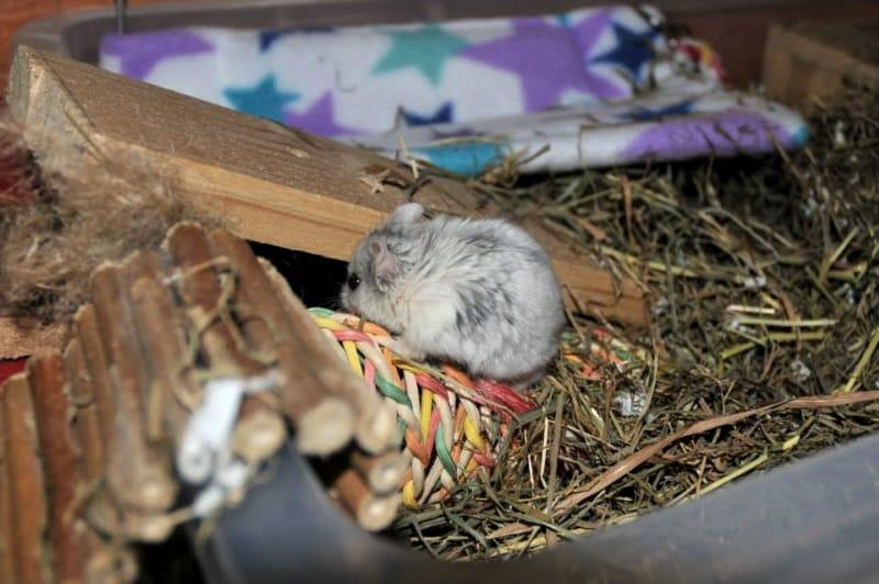 Hamster's digging box