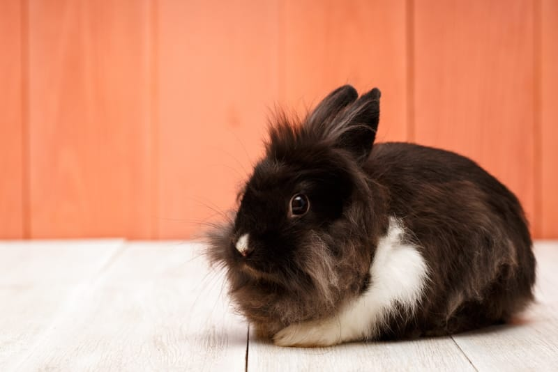 Black and white bunny names