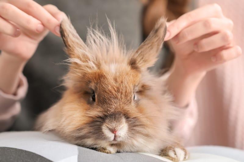 Pet Rabbit Ear Care
