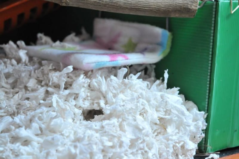 Paper bedding for hamsters