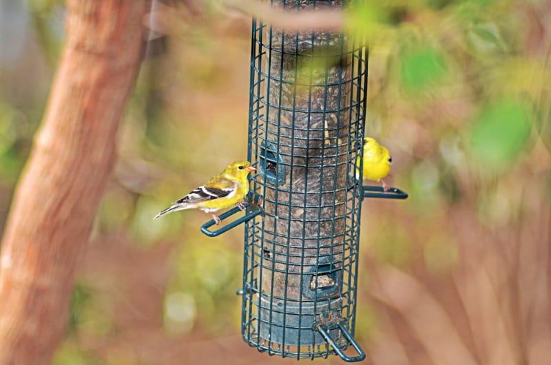 Thistle / Nyjer / Finch bird feeder
