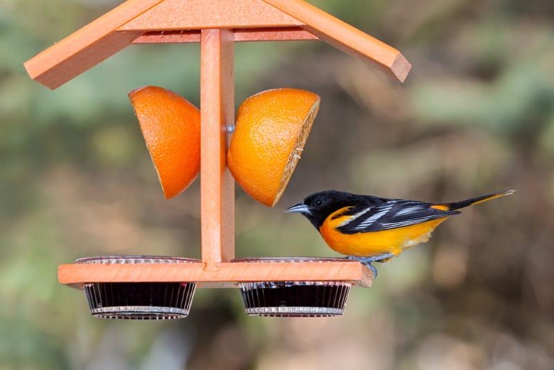 Fruit / Oriole bird feeder