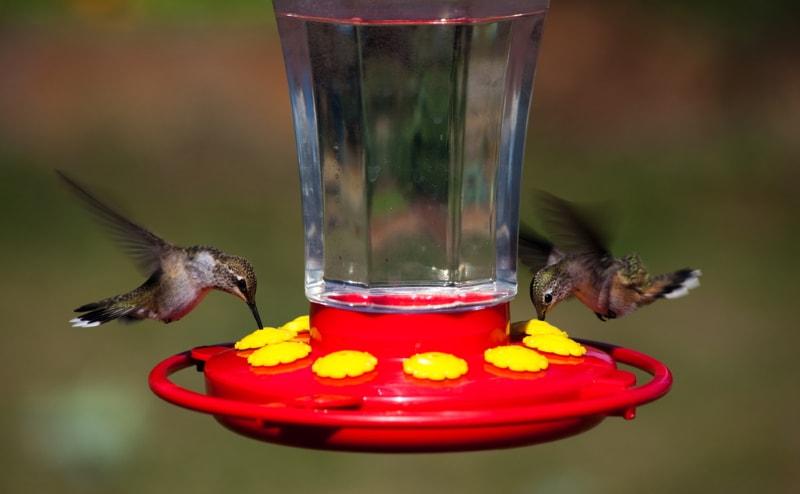 Nectar bird feeder