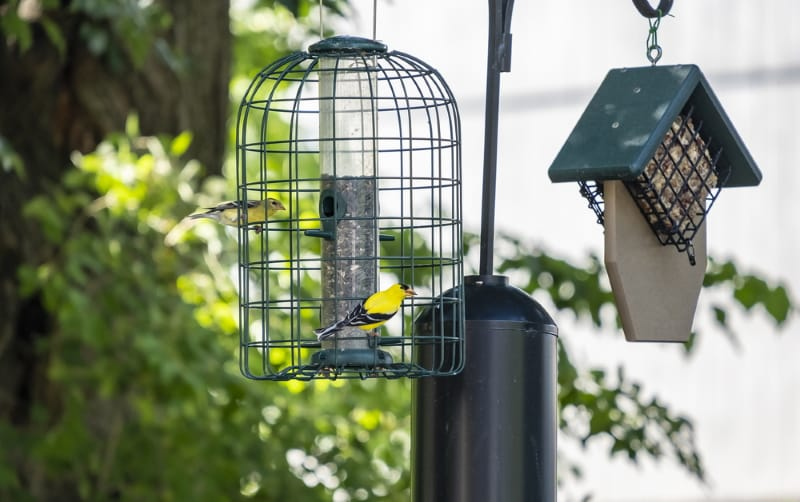 Best feeders to attract Finches
