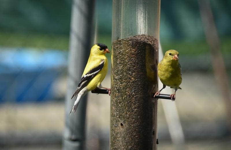 Tube feeder for birds