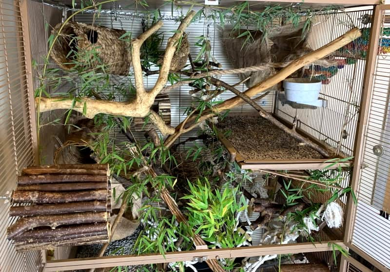 Naturalistic & Bioactive Rat Cage