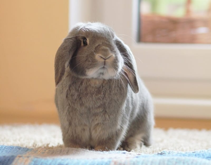 How to keep rabbit cool in summer
