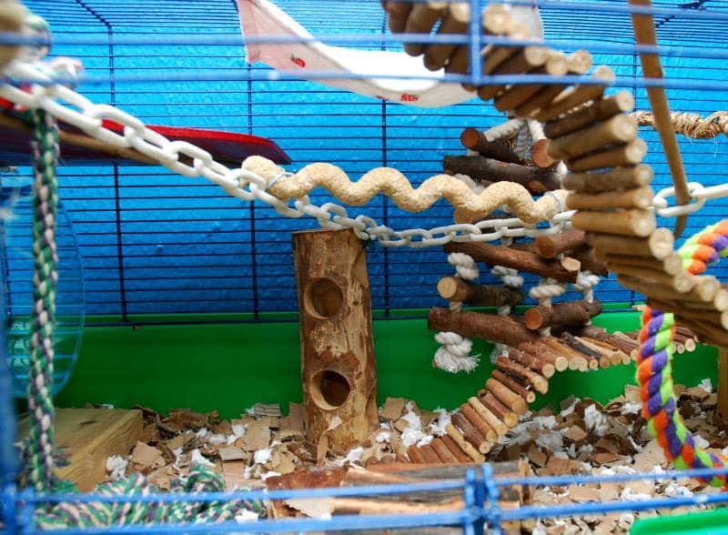 Tips for setting up a pet mice cage