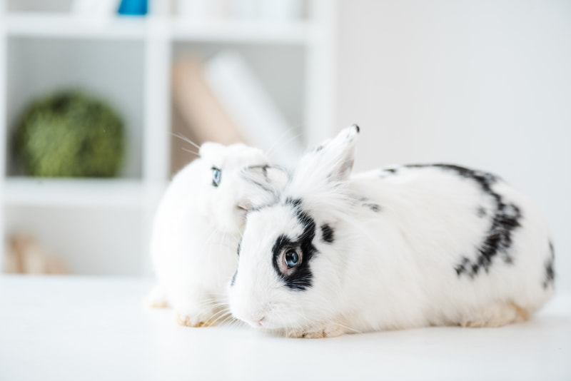 Things to know before adopting rabbits