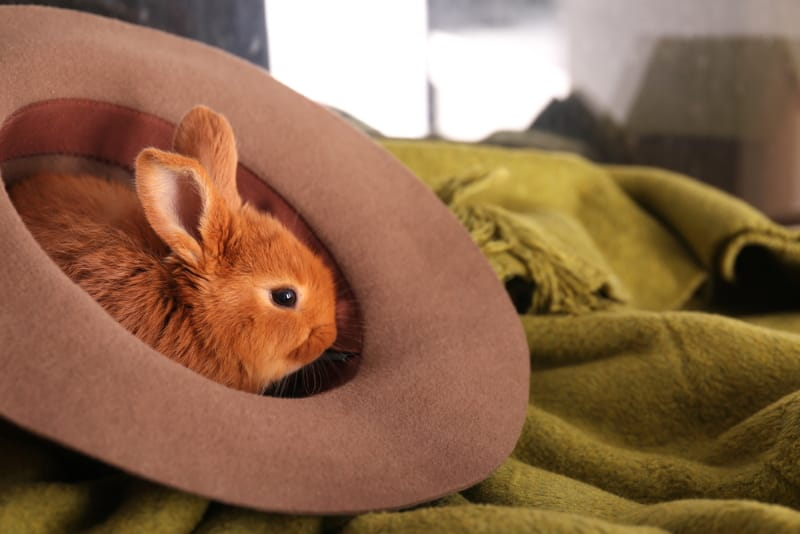 What to do when your rabbit is bored