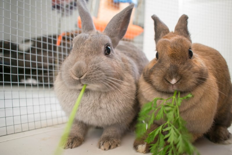 How to keep bunnies busy